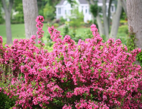 Spring Pruning Tips