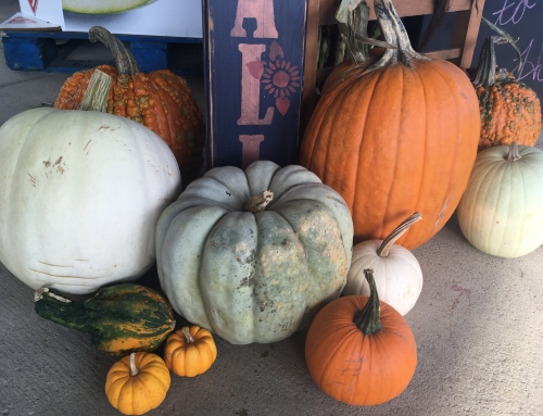 Decorate for Fall at Hook's