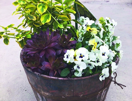 How to make an early spring planter
