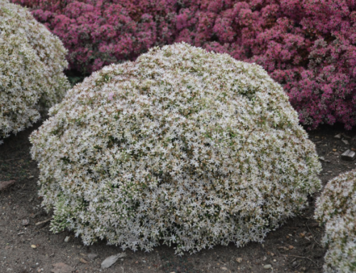 Plants for Tricky Spots