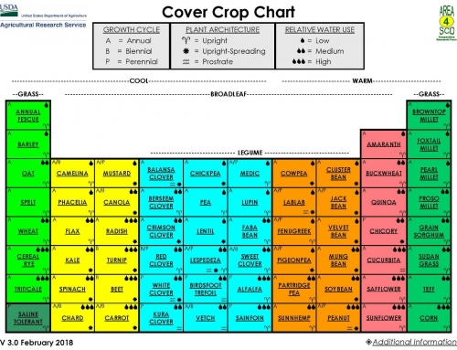 An Introduction to Cover Crops