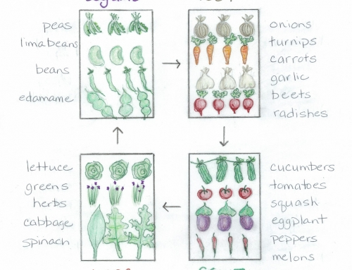 The Basics of Crop Rotation
