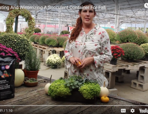 Decorating And Winterizing A Succulent Container For Fall (Video)
