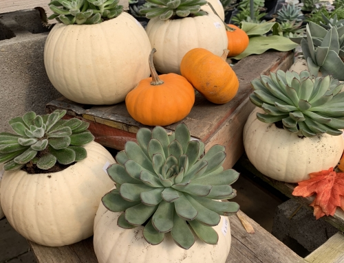 Succulent Pumpkin Planter (Video)