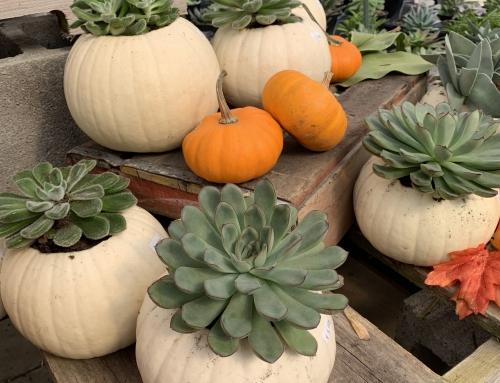Succulent Pumpkin Planter (Video)
