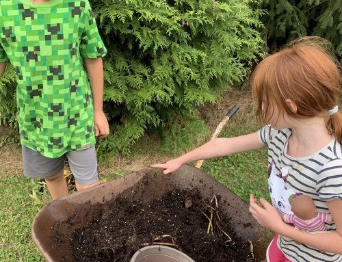 Growing Potatoes with Kids.